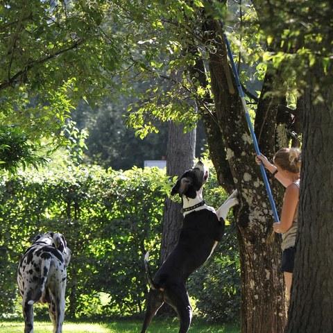 Lara hilft beim Pflaumen pflücken ;-)!