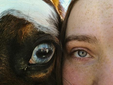Auge - Sicht - Pferd - Mensch