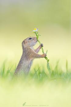 Blumenliebhaber