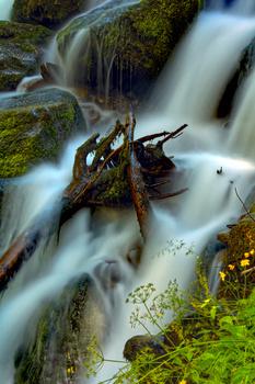 Natur in Tirol