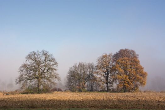 Herbst Sonne und Nebel