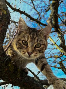 wildcats II