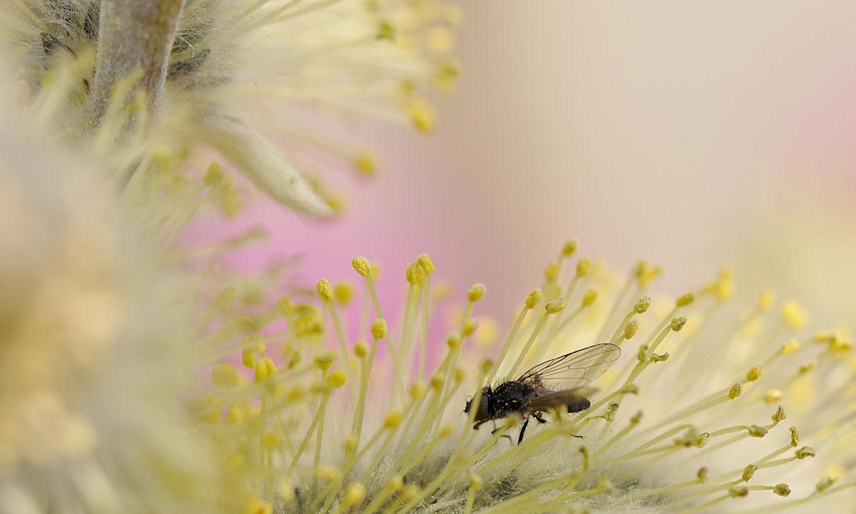Mini Fliege