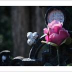 FriedhofDerNamenlosen(6)