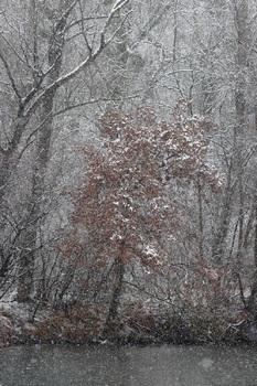 Schneeflockerl...