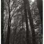 im Walde....