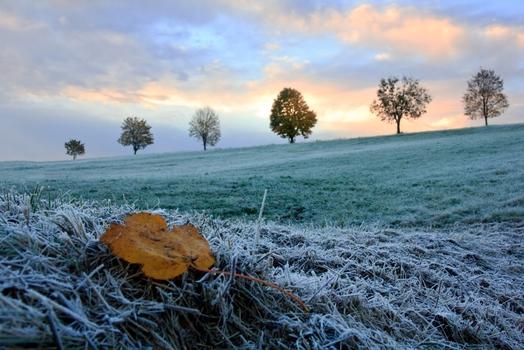 Blätterfrost