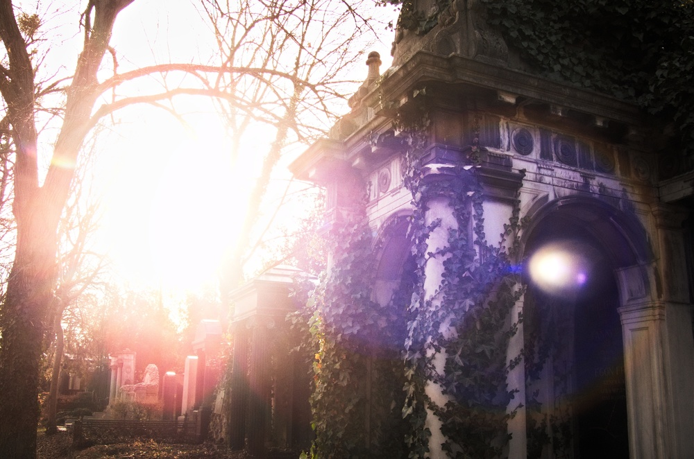 cemetery vienna