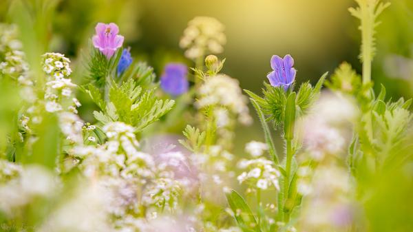 Nur Blumen
