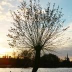 Blick auf die Lübecker Silhouette