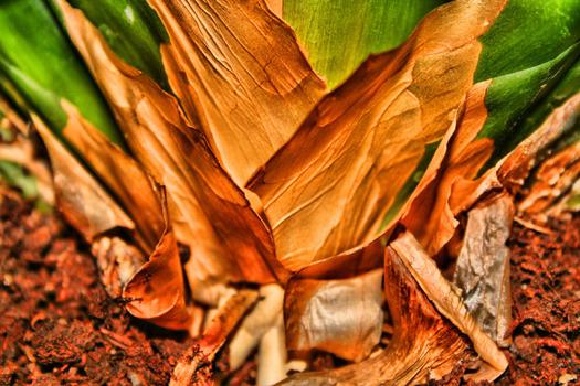 Eine unbedeutende Palmenwurzel