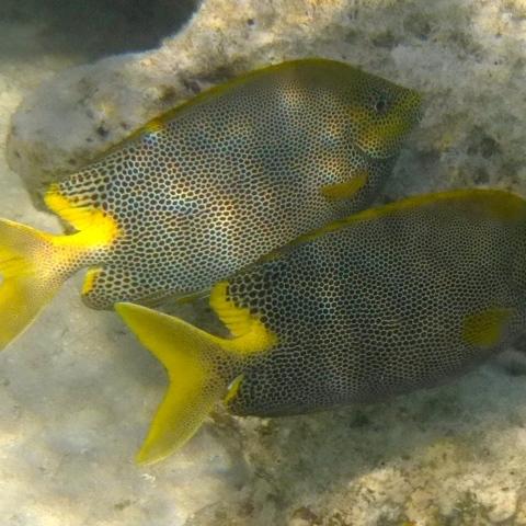 Fische im Rotem Meer