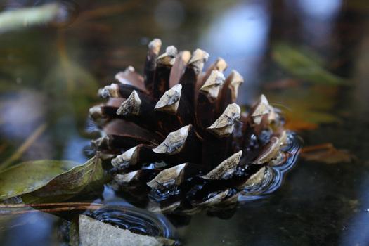 Bockerl im Wasser