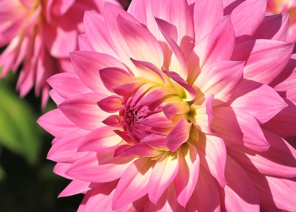 Think Pink... ;-)