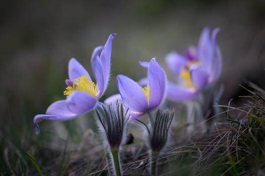 Es wird Frühling.