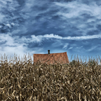 Mais vor der Hütte