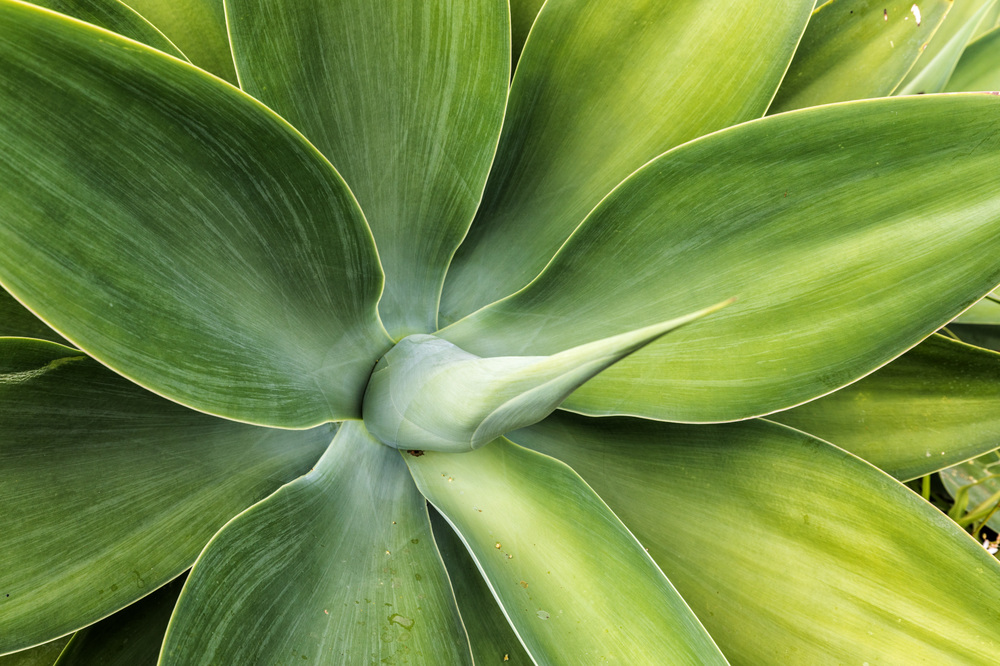 Madeiragrün_2