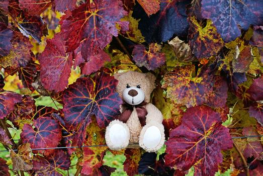 Der Herbst im Weingarten