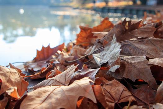 Herbst im Laxenburger Schlosspark