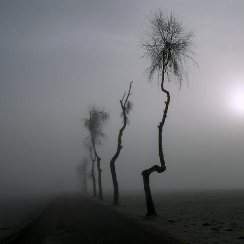 """bizarre Bäume im Nebel"""