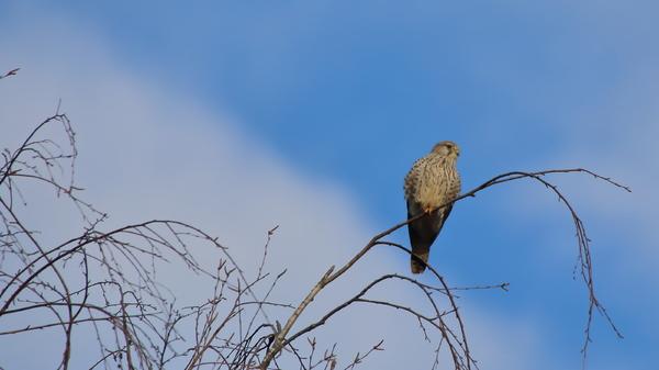 Naturschutz ? keine Singvögel mehr