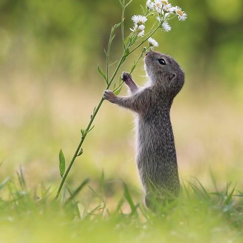 Eine handvoll Blumen