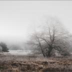 Phantasie ist wie Realität im Nebel.