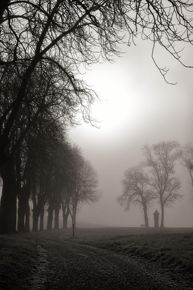 schon wieder Nebel...II