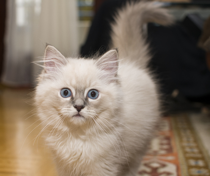 So Blaue Augen